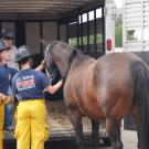 UC Davis Firefighters learn to safely and carefully load a horse into a trailer for transport.